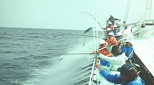がつお漁の写真0