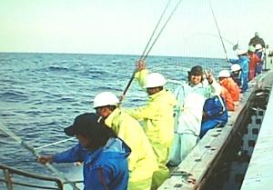 がつお漁の写真1