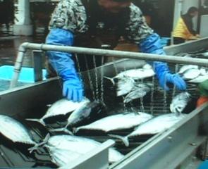 漁市場の写真1