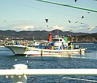 安乗漁港2