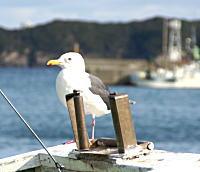 安乗漁港3